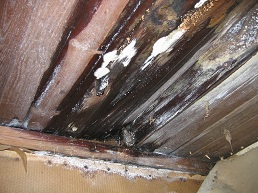 Don't Let Attic Leaks Ruin Your Holidays