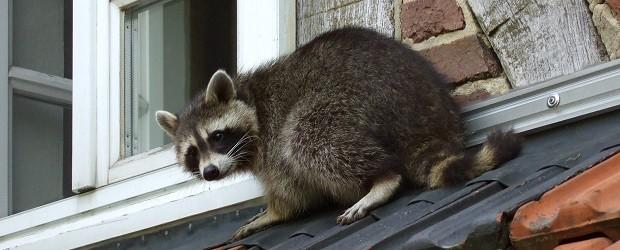 Creature Comfort in Gainesville