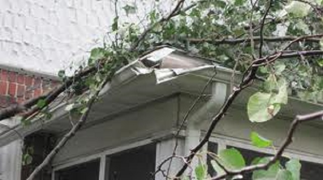 Tree branches Can Damage Your Gutters