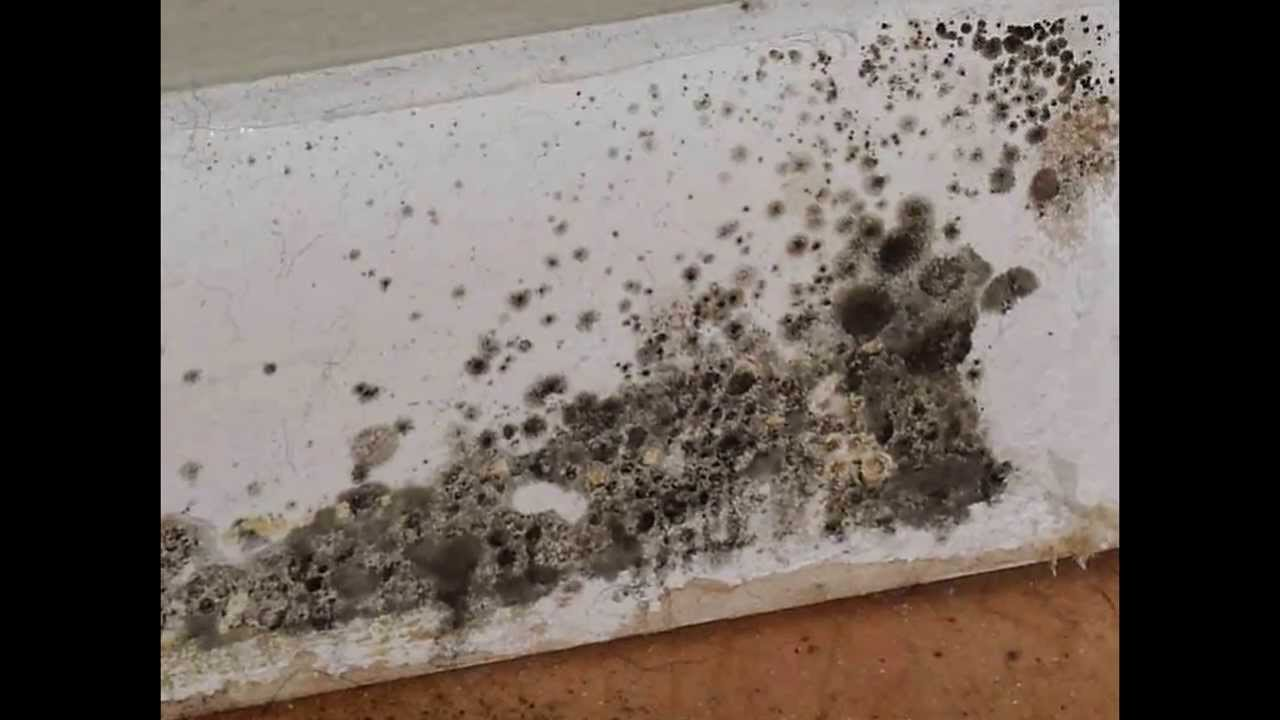 Mold and Mildew Mean Replacement in Your Home