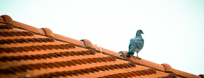 One Of the Top Best Practices to Enhance Your Roof's Life